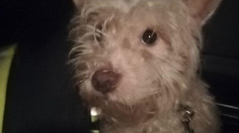 Hambach #TIF# herrenloser Hund