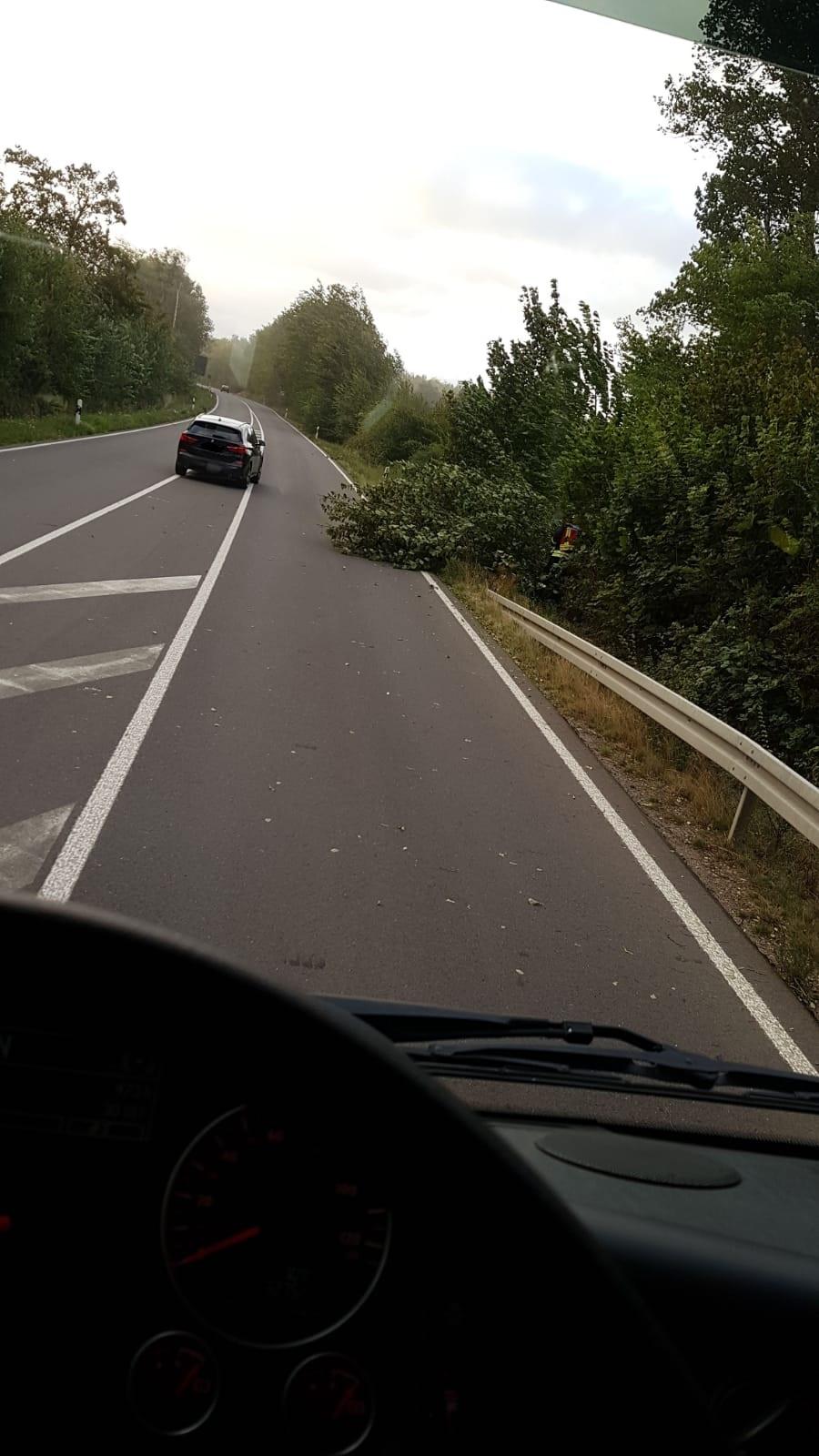 Hambach #TH# Baum auf Straße